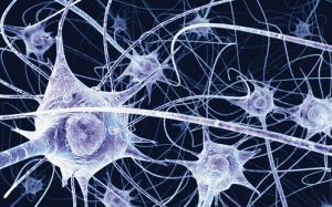 neurons_in_brain