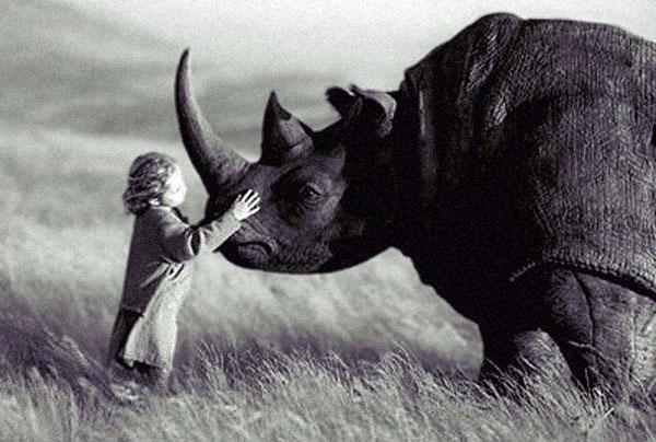 Trusting-rhino